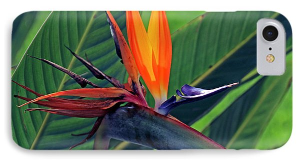 Bird Of Paradise IPhone Case by Larry Nieland