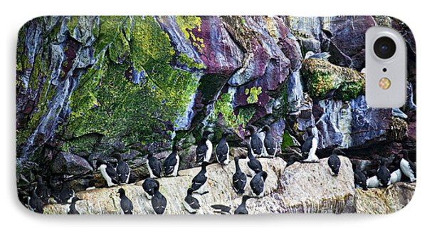 Birds At Cape St. Mary's Bird Sanctuary In Newfoundland IPhone Case by Elena Elisseeva