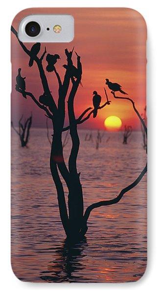 Birds On Tree, Lake Kariba At Sunset Phone Case by Axiom Photographic