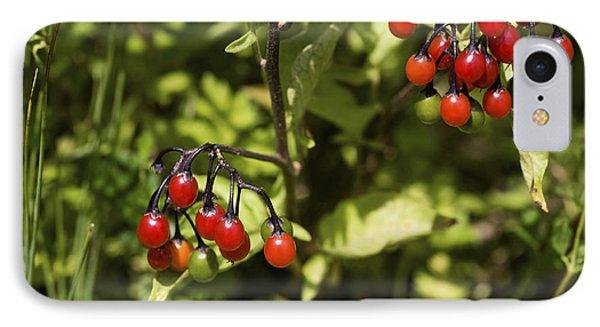 Bittersweet Berries (solanum Dulcamara) Phone Case by Dr Keith Wheeler