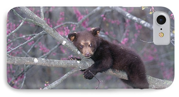 Black Bear Cub On Branch Phone Case by Alan and Sandy Carey and Photo Researchers