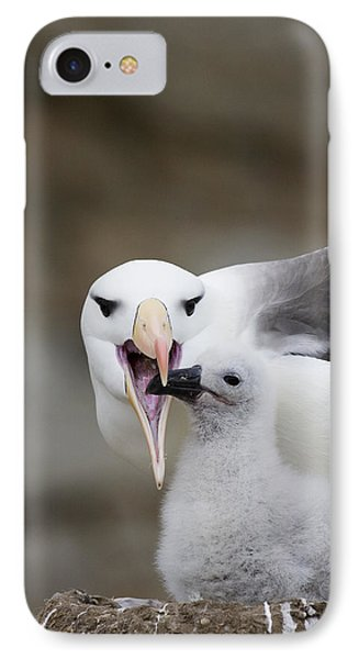Black Browed Albatross Preparing Phone Case by Suzi Eszterhas