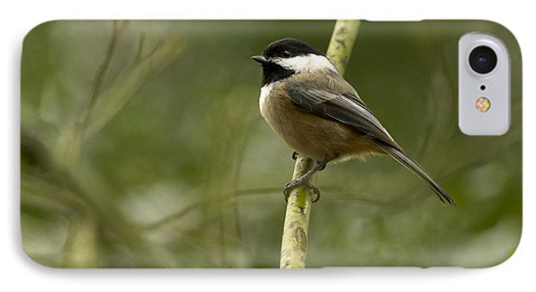 Black-capped Chickadee With Branch Bokeh Phone Case by Sharon Talson