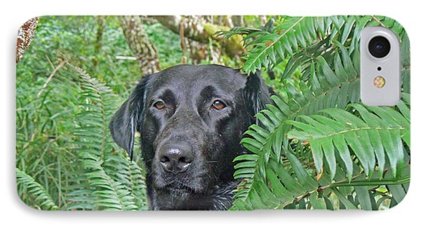 Black Dog In The Ferns IPhone Case