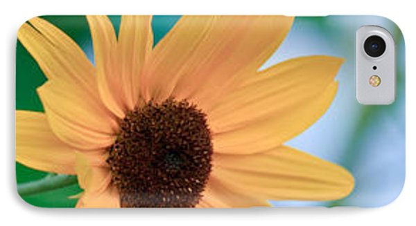 IPhone Case featuring the photograph Black-eyed Susan by Ann Murphy