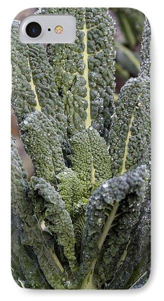 Black Kale (brassica 'nero De Toscana') Phone Case by Maxine Adcock
