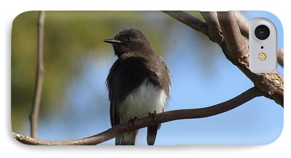 Black Phoebe IPhone Case by Bonnie Muir