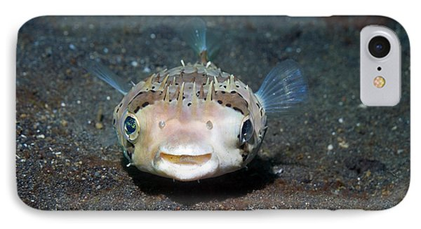 Black-spotted Porcupinefish IPhone Case
