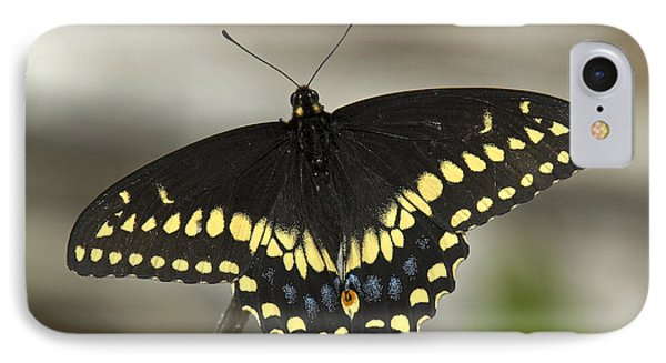 Black Swallowtail Din103 IPhone Case by Gerry Gantt