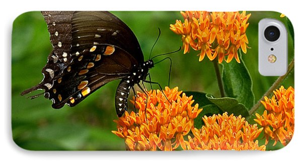 Black Swallowtail Visiting Butterfly Weed Din012 IPhone Case by Gerry Gantt