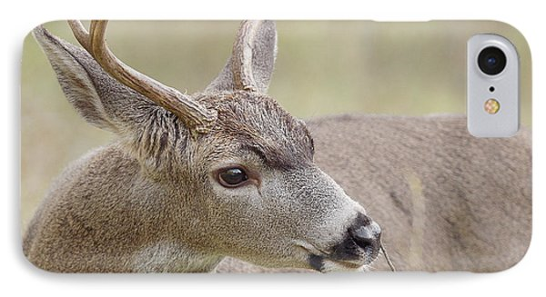 IPhone Case featuring the photograph Black-tailed Deer by Doug Herr