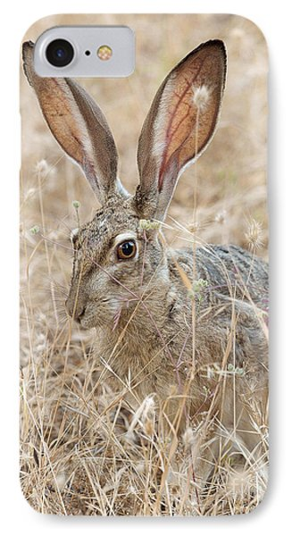 IPhone Case featuring the photograph Black-tailed Hare by Doug Herr