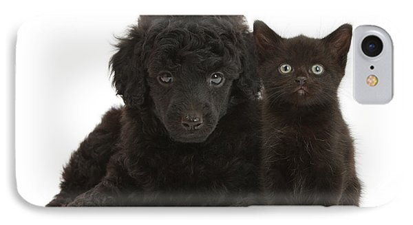Black Toy Poodle And Black Kitten IPhone Case by Mark Taylor