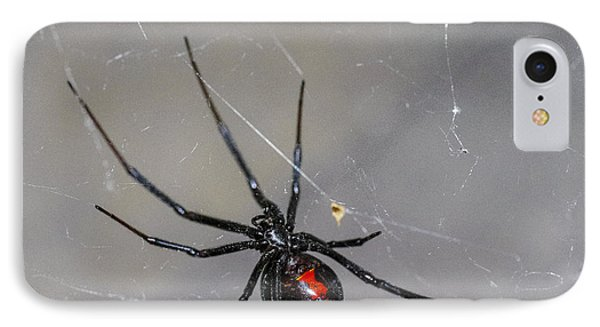 Black Widow Spider Phone Case by Scott McGuire
