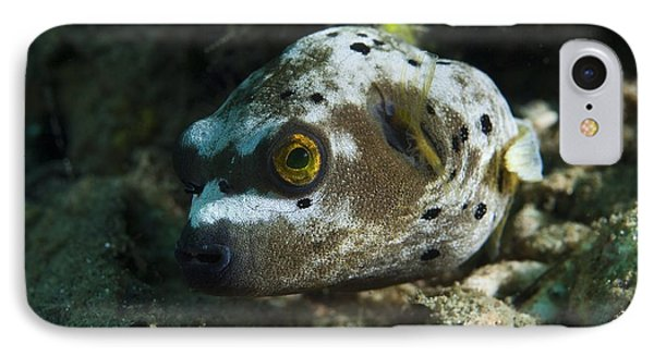 Blackspotted Puffer Phone Case by Matthew Oldfield