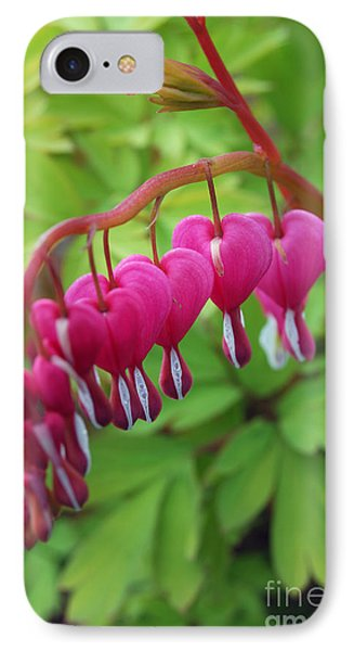 IPhone Case featuring the photograph Bleeding Heart  by Eva Kaufman