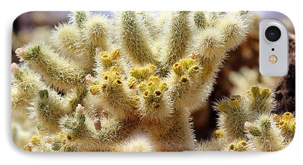 Blooming Cholla IPhone Case