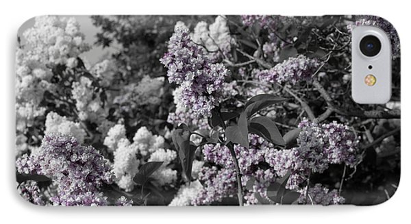 IPhone Case featuring the photograph Blooms by Colleen Coccia