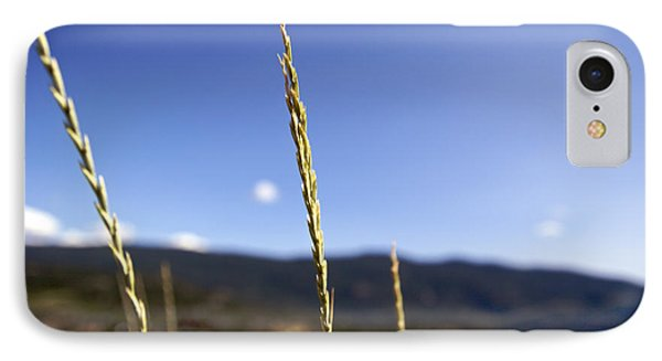 Blowing In The Wind IPhone Case by JM Photography