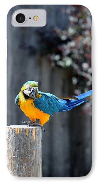 Blue And Gold Macaw IPhone Case