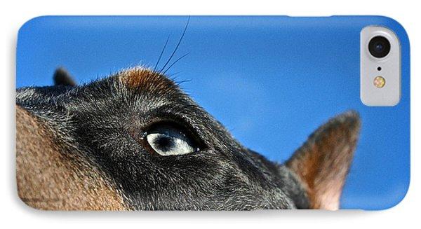 Blue Doberman Pinscher IPhone Case