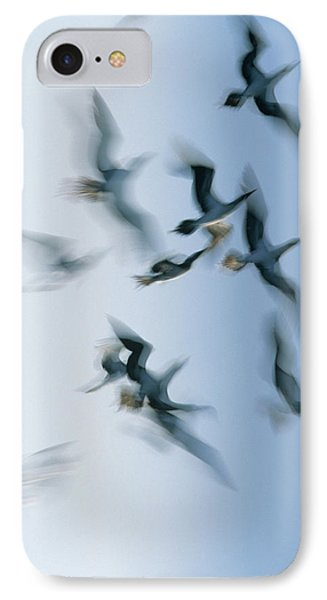 Blue-footed Booby Sula Nebouxii Flock Phone Case by Winfried Wisniewski