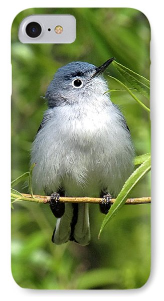 IPhone Case featuring the photograph Blue-gray Gnatcatcher Dsb147 by Gerry Gantt