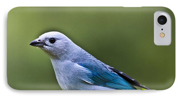 Blue-grey-tanager Phone Case by Heiko Koehrer-Wagner