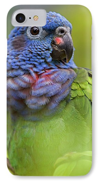Blue-headed Parrot Pionus Menstruus Phone Case by Ingo Arndt