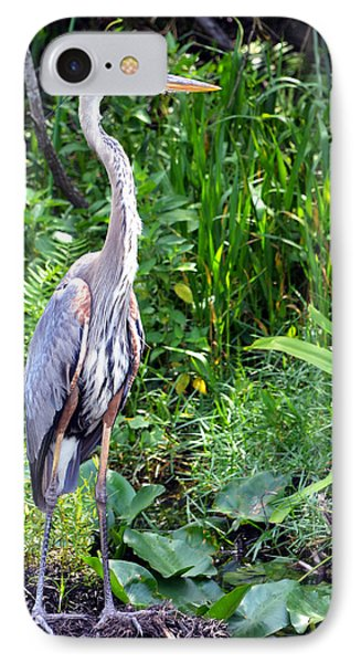 IPhone Case featuring the photograph Blue Heron At The Everglades by Pravine Chester
