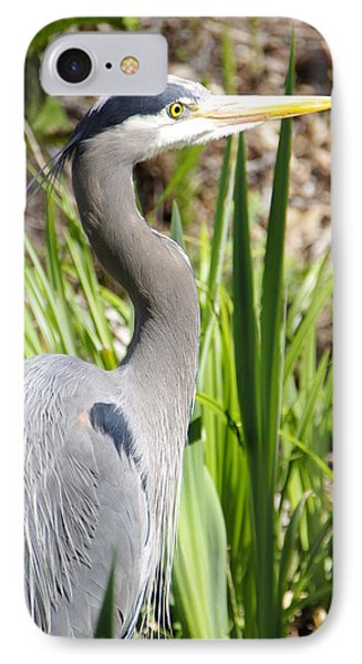 IPhone Case featuring the photograph Blue Heron by Marilyn Wilson
