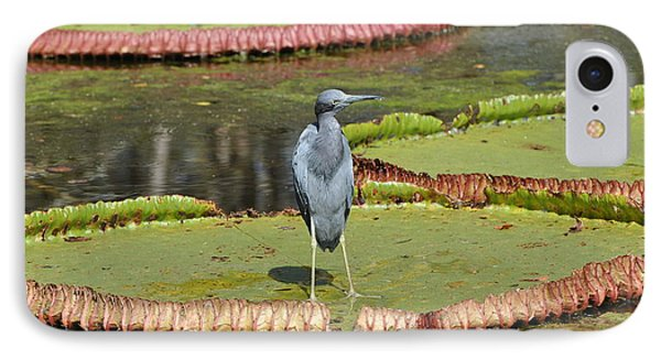 IPhone Case featuring the photograph Blue Heron On Giant Lilly Pad by Jodi Terracina
