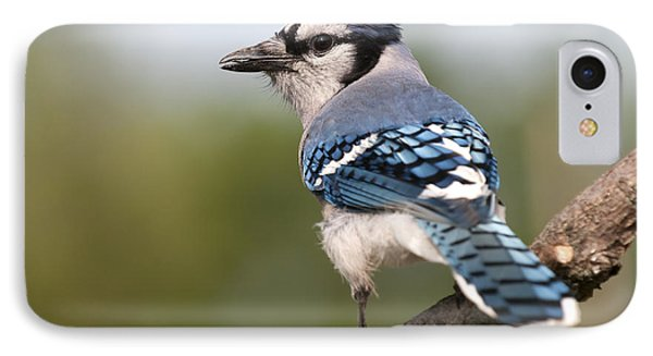 IPhone Case featuring the photograph Blue Jay by Art Whitton