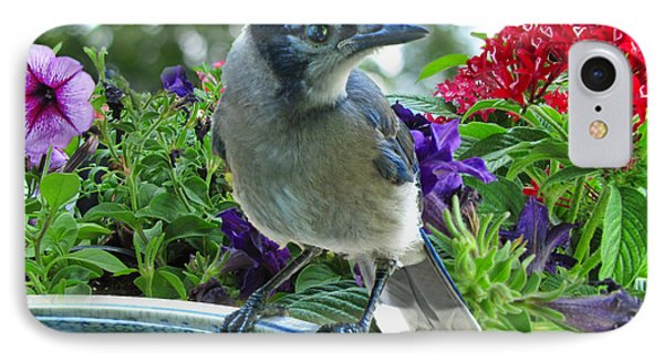 IPhone Case featuring the photograph Blue Jay At Water by Debbie Portwood