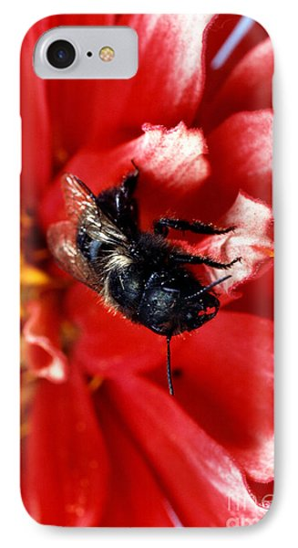 Blue Orchard Bee Phone Case by Science Source