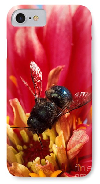 Blue Orchard Bee Phone Case by Scott Bauer