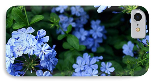 Blue Plumbago IPhone Case by Barbara Middleton