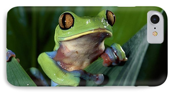Blue-sided Leaf Frog Agalychnis Annae Phone Case by Michael & Patricia Fogden