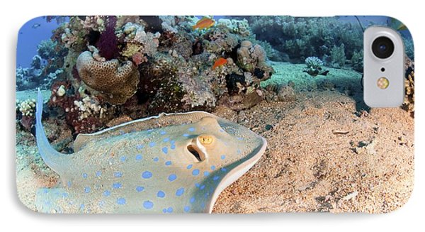 Blue-spotted Stingray Phone Case by Photostock-israel