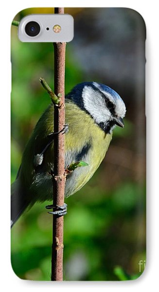Blue Tit Phone Case by Alan Clifford