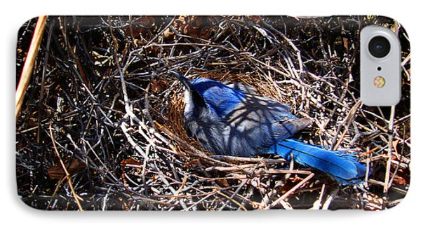 IPhone Case featuring the photograph Bluebird In Her Nest by Susanne Still