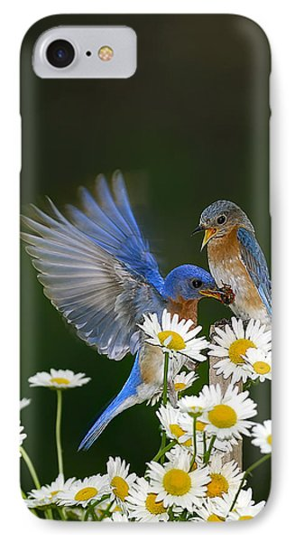 IPhone Case featuring the photograph Bluebirds Picnicking In The Daisies by Randall Branham