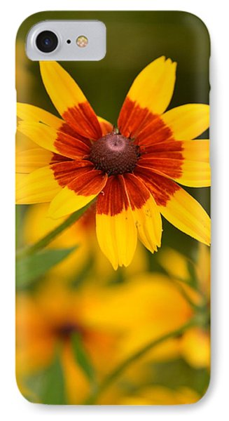 IPhone Case featuring the photograph Blush-eyed Susan by JD Grimes