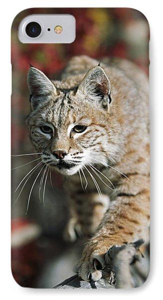 Bobcat Felis Rufus Phone Case by David Ponton