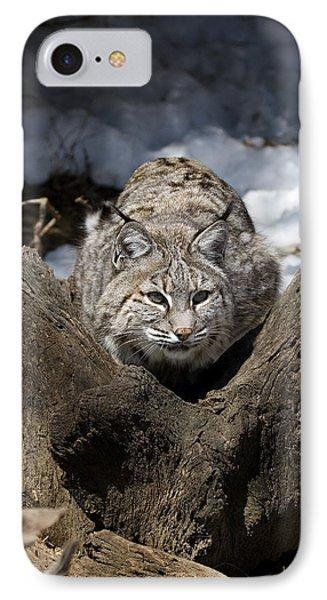 Bobcat  Phone Case by Jeff Grabert