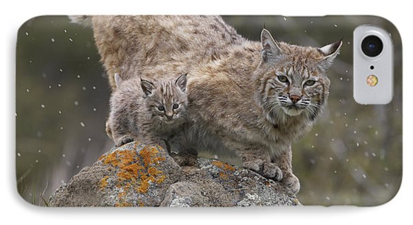 Bobcat Mother And Kitten In Snowfall IPhone Case by Tim Fitzharris