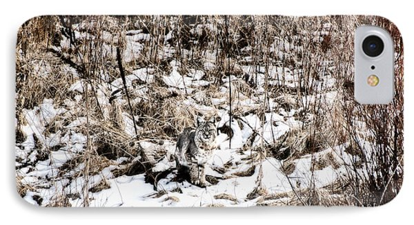 IPhone Case featuring the photograph Bobcat Winter by Britt Runyon