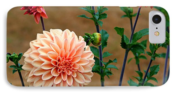 Bodaciously Orange IPhone Case by Jeanette C Landstrom