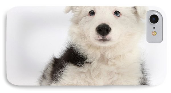 Border Collie Female Puppy Phone Case by Mark Taylor