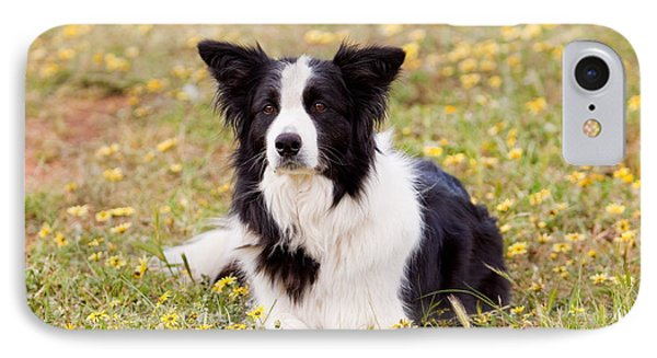 Border Collie In Field Of Yellow Flowers Phone Case by Michelle Wrighton